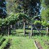 Rocky Fresh Farm