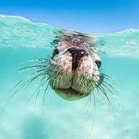 Turquoise Safaris - Sea Lion & Fishing Charters Jurien Bay