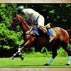Union Hill Polo Club