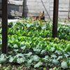 Earth Grown Greens