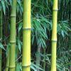 Ambiances et Bambous