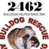 Bulldog Rescue & Rehoming - Charity