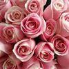 Inspirations floral design