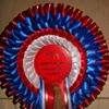 Ashgate Hospice Charity Horse Shows