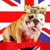 Betty Brown's Beauties Dog Grooming - Luxury Pamper Parlour Redcar