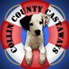 Collin County Castaways