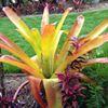 Tropical Vibe Nursery & Landscape Design