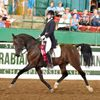 Centerline Sport Horses INC