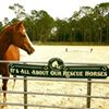 Equine Rescue and Adoption Foundation -  ERAF - Horse Rescue, Palm City, FL