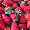 Jennen Strawberry Farm