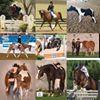 Valerie Gramm Performance Horses