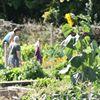 Colin Glen Allotments, Community Garden & Healthy Living Centre
