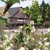 Bolton Spring Farm