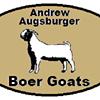 AA Boer Goats