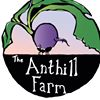 The Anthill Farm