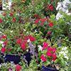 Kerby's Nursery & Landscaping
