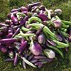Kaleidoscope Vegetable Gardens