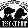 Classy Canines
