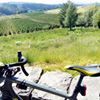 Veal Bikes Plus