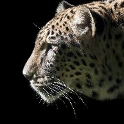 Internetagentur seo-leopard e.K.