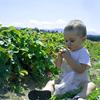 Graysmarsh Berry Farm