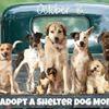 Yancey County Humane Society