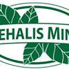 Chehalis Mints