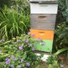 Just Bee Apiary