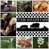 Stark Hollow Farm