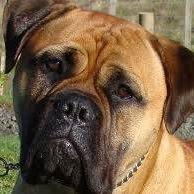 Dogs Sri Lanka