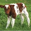 Fatima Dairy Farm