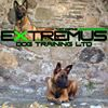 Extremus Dog Training Ltd