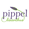 Pippel Lisianthus