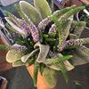 Hayleys Flowers