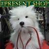 The Present Shop