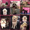 Mucky Pups Dog Groomers 02920-233336