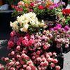 Minehead Farmers' Market