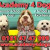 Academy 4 Dogs, Stockport