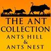 Ant's Nest & Ant's Hill Bush Homes