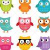 Hoot Owl Photography