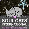 Soul Cats     International thumb
