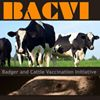 Badger and Cattle Vaccination Initiative
