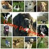 County Pet Services  and assistance with missing dogs.