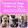 Pampered Dogs Grooming Salon Guernsey