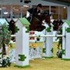 RD Sport Horses
