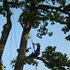 DTS, Tree Surgery & Grounds Maintenance