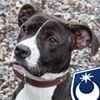 Portsmouth Stray Dog Kennels