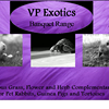 VP Exotics Small Animal & Reptile Boarding Services. Veterinary Nurse