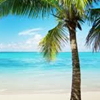 The Beach : Tanning Salon