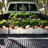 Mustafawi Organic Vegetables